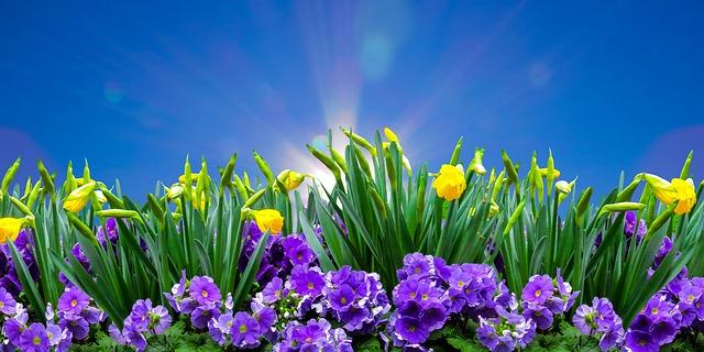 spring banner photo