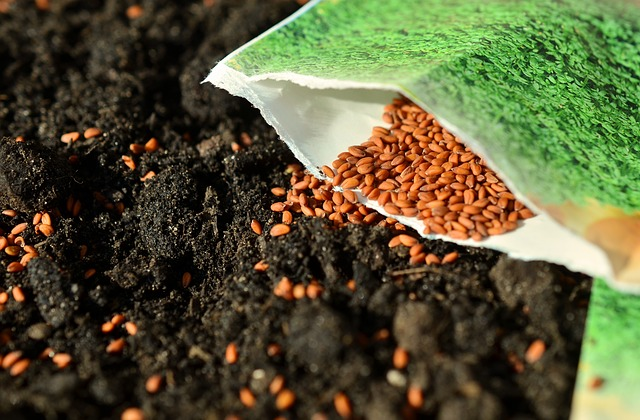 sow seed photo