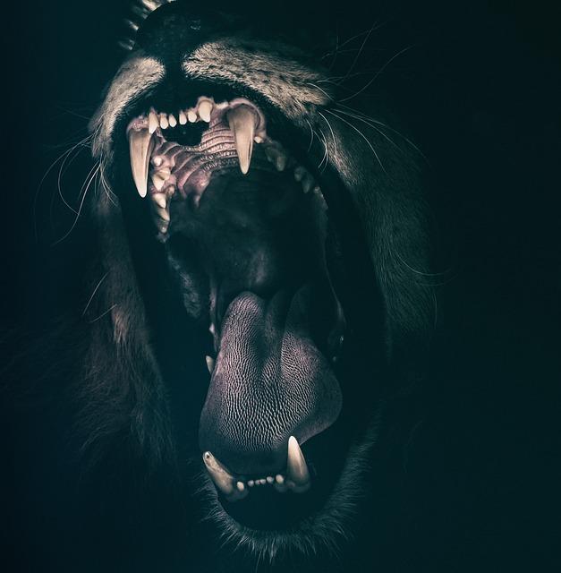 roaring lion photo